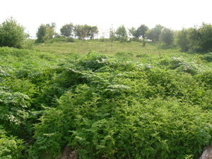 Regulated plot of land situated 80 km from the Black sea