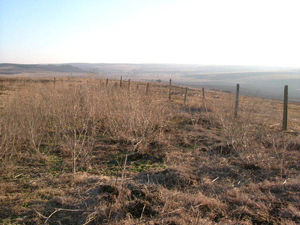 Nice plot of land situated in a quiet village 30 km from sea