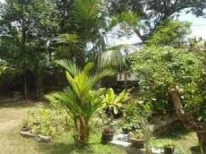 SRI LANKA PRIME PROPERTY FOR SALE PRIME PROPERTY FOR SALE