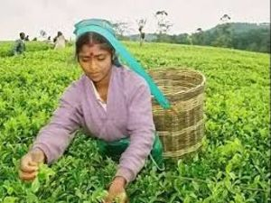 2000 ACRES TEA ESTATE FOR SALE SRI LANKA