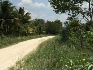 94 acres of farmland in Spanish Lookout Area, Belize