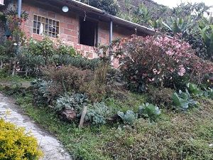 Farm for sale, 2 hectares, near San Agustín, Huila, Colombia