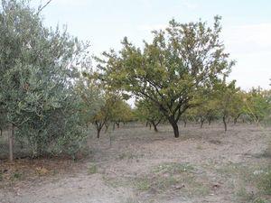 Land in Sicily - Caterina Cda Chiano Alessandria