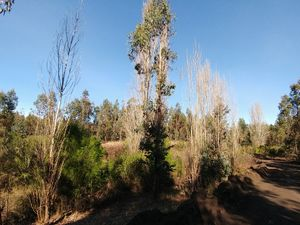 Farm for sale, 1/2 hectares