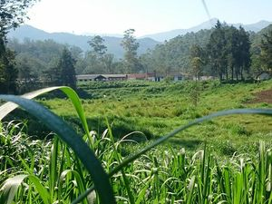 BEAUTIFULLY TEA ESTATE FOR SALE SRI LANKA