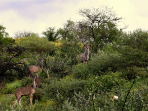 Plots for sale --> Game farm Ongos-east, Windhoek Namibia
