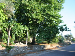 Building plot 802sqm with many fruit trees