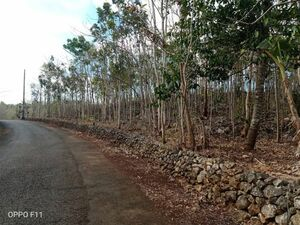 perfect land for investors