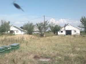 Agricultural land for sell in Oltenia