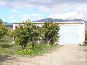 Citrus grove & building. FPRC03