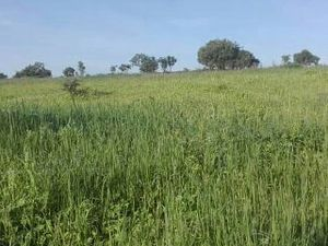 LAND FOR SALE IN MUNGWI,ZAMBIA