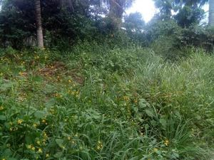 1,003sqm lot for sale @ Brgy. Tacunan