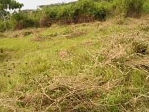 500sqm RESIDENTIAL LOT FOR SALE IN SAMAL ISLAND