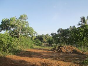 Land for sale in Ranna near beach
