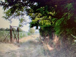 Hungary House /Farm with big Land for SALE!
