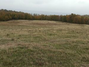 10.000 sqm Forest land with mountain & city view