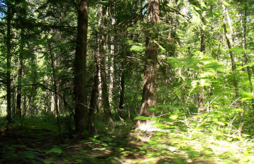 More timber and glade